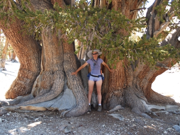 Vicki standing next to the enormous trunk of The Patriarch, the world's largest bristlecone pine tree