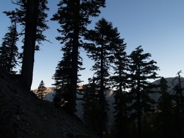 Early morning silhouette of pine trees on the Kelly Camp Trail. Mount Baldy is lit in the background.