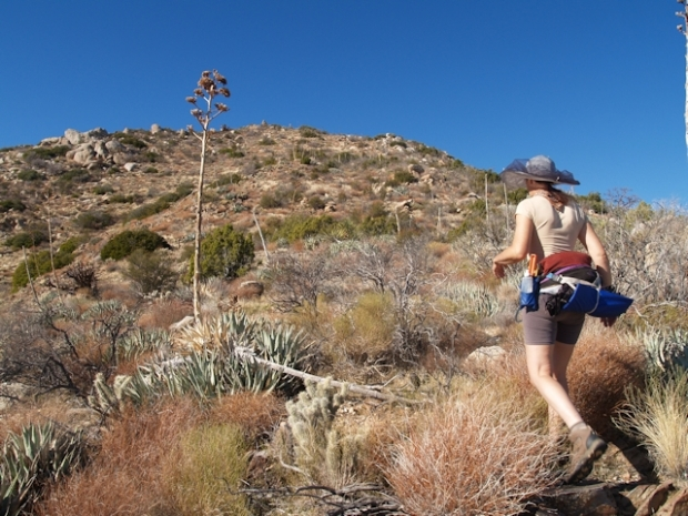 Yucca- and cholla-whacking the northeast ridge of Granite Mountain